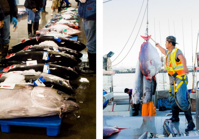 Fish Auction - Oahu | immaEATthat.com