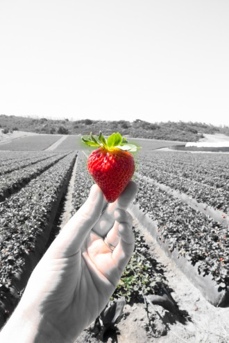 california strawberry commission tour \\ immaEATthat.com