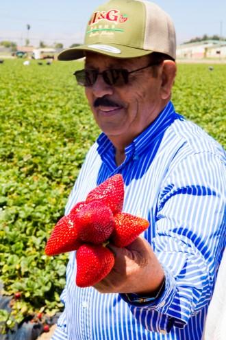 california strawberry farm tour \\ immaEATthat.com