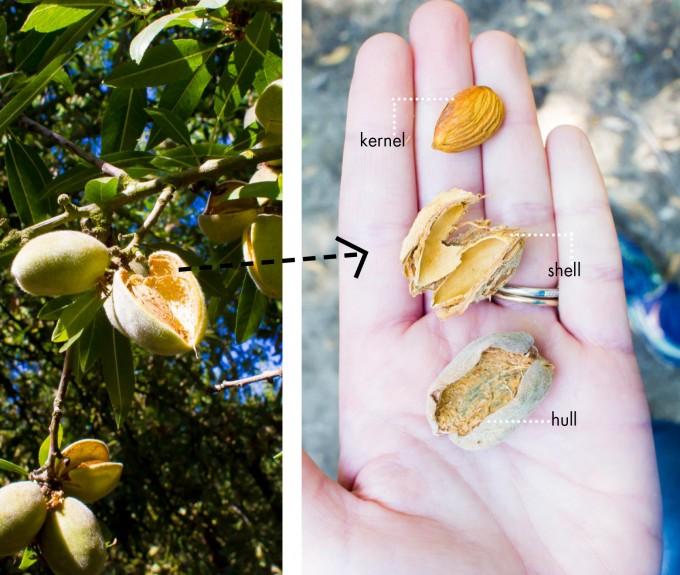 almonds! | immaEATthat.com
