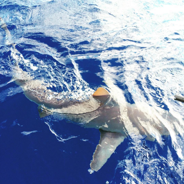 shark cage excursions - Oahu | immaEATthat.com